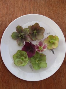 hellebores on plate